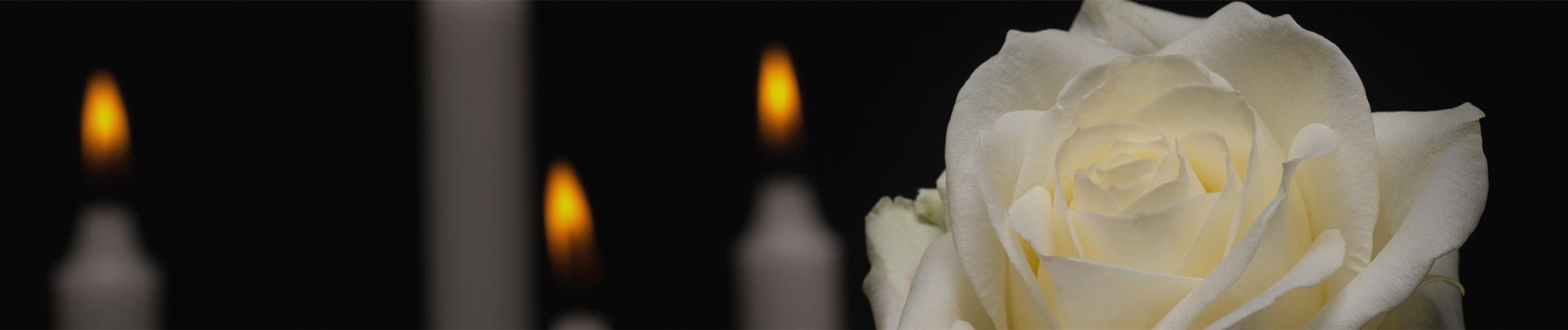Baner świeczki róża